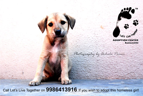 Foster Homes For Dogs In Bangalore