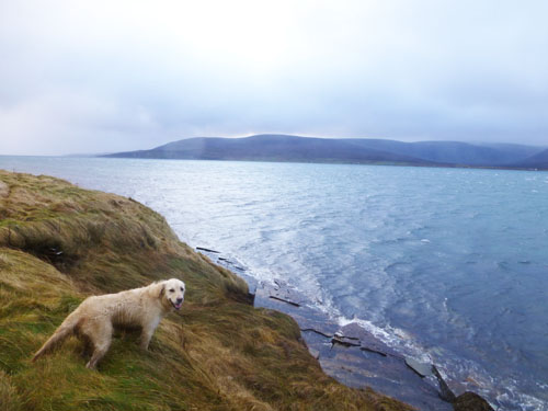 Molly overlooking Hoy-edited