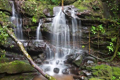 A rainforest in Thailand