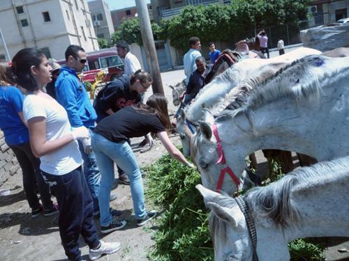 feeding horses,resized,edited