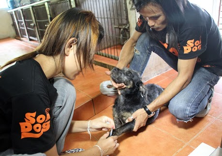 sdf_newsletter_may_2013_50000th_dog_with_two_thai_helpersIMG_6202