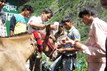 PFA Dehradun flood relief team treating one of the horses
