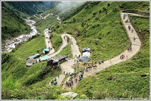 Horses carrying pilgrims on the route up to Kedarnath, before the floods