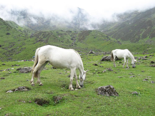 Kedaranath horses before the floods