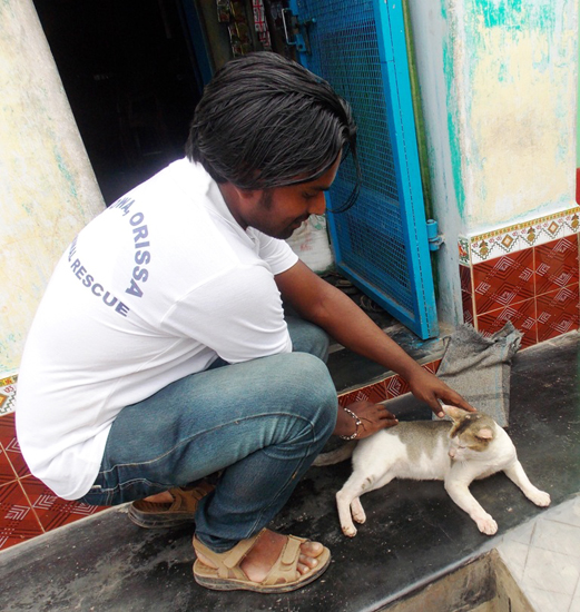 Mr. Sukumar Parida, one of APOWA's disaster response team members, caring for a surviving cat at Purunabandha village in Ganjam district.