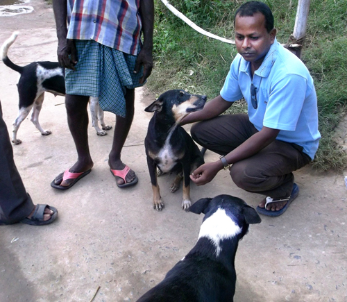 Mr. Bijaya, of APOWA, with neighborhood dogs in  Singhagaon village.