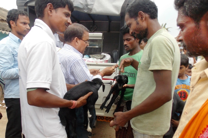 Two volunteers brought two baby goats to Dr. Laxman Behera for treatment.