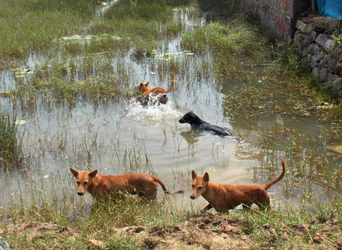After the cyclone moved along the Odisha coast on October 12, 2013, it left both people and animals feeling insecure and unsettled.