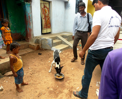 APOWA's disaster rescue team member, Mr. Subhajyoti Panda, feeds a homeless dog  in Pallibandha village of Ganjam district)