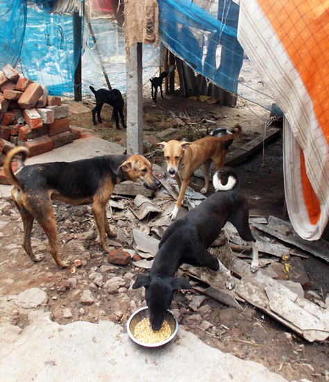 These rescued dogs are so happy to eat, they have no problem sharing their food.
