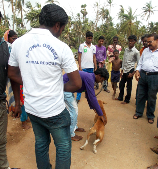 A volunteer helps an injured stray dog, about to be treated by APOWA's vet doctor, Dr Laxman Behera, at Pallibandha village in Ganjam district.