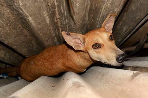 rescued dog blue cross