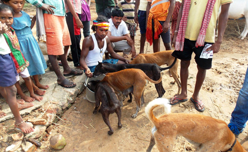 Many neighborhood dogs are hungry and scared; our rescue team is feeding these animals with the help of village volunteers.)