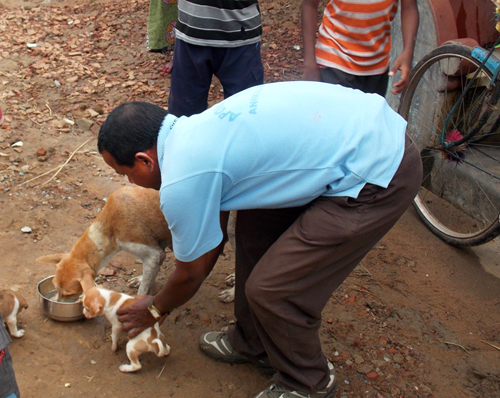 Mr. Bijaya is helping a puppy, while our team feeds her mother.