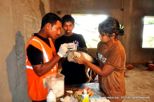 treating a bird1422529_10153380421540494_988676677_n