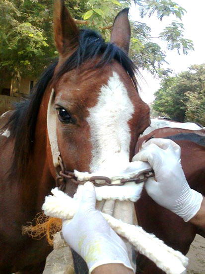horse with nose pad Pic 3