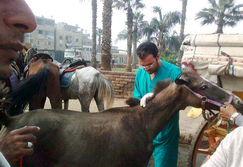 vet with horsePic 6-1