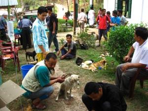 An ABC Camp at Kalimpong Animal Shelter