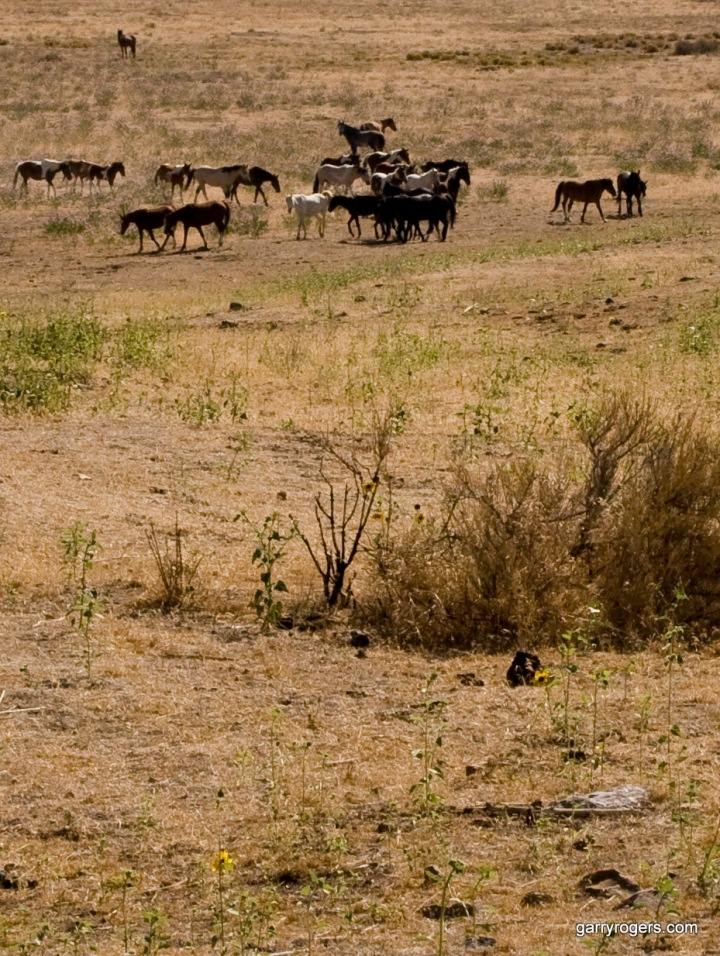BLM, Cattle, Wild Horses, and Biodiversity on Western U. S.Ranges