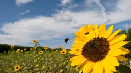 Photo courtesy of centerforfoodsafety.org