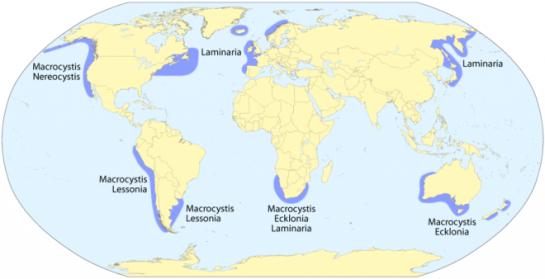 Kelp Forest Distribution (Woodward, Radford.edu)