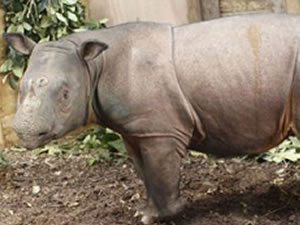 The Big Rhino DebtSwap