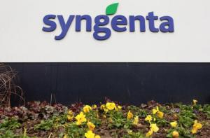 Agrochemicals maker Syngenta's logo is seen in front of the company's headquarters in Basel