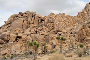 Joshua-Tree-NP,-rock-mtn
