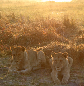 Serengeti at Sunrise