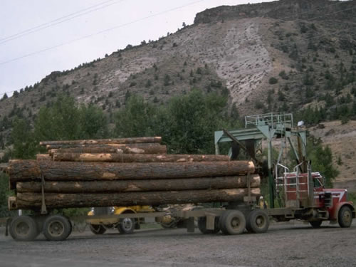 Massive reforms to China's forestry industry put inmotion