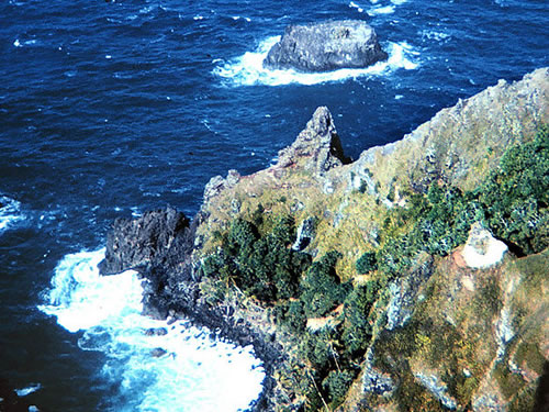 Marine wildlife gets boost frombudget