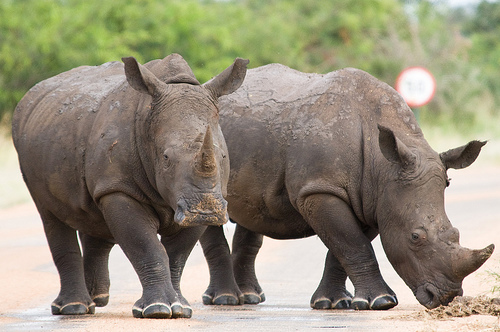 Critical conference maintains global momentum to curb wildlifecrime