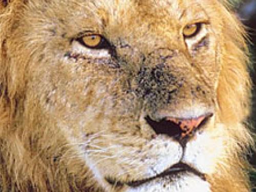 New York presses for progressive trade ban on endangeredwildlife