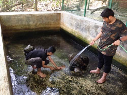 3. RAWW volunteers cleaning Turtle Tank