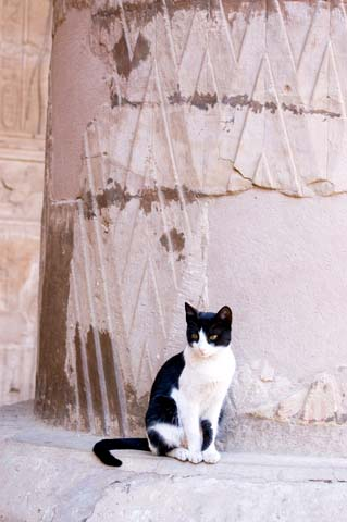 © Basphoto | Dreamstime.com - Cat At Ancient Egyptian Temple Photodreamstime_xs_18006751