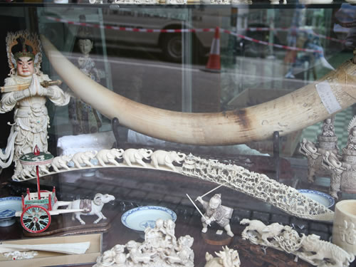 75% of people in Hong Kong support ivory tradeban
