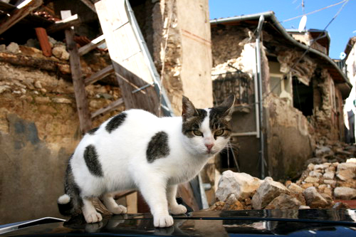 One of many thousands of community cats spayed or neutered by Lega Pro Animale