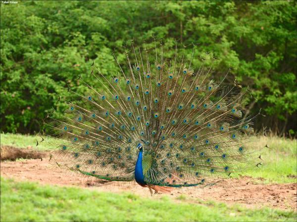 photo credit: Pallivar Kaiwar