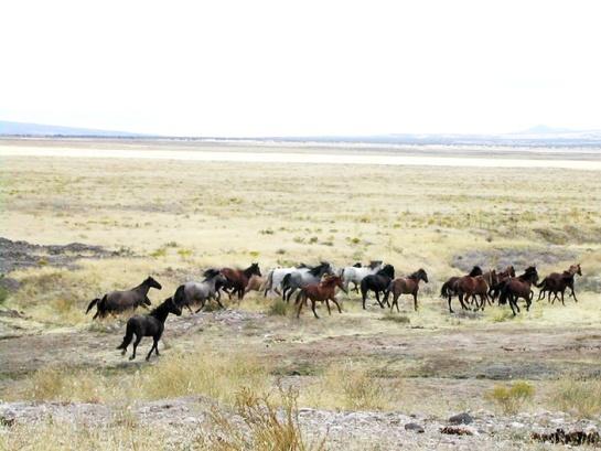 800px-Mustang_Utah_2005_2
