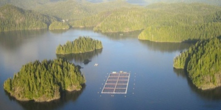 Ahousaht First Nation Warriors Win B.C. Salmon FarmStandoff