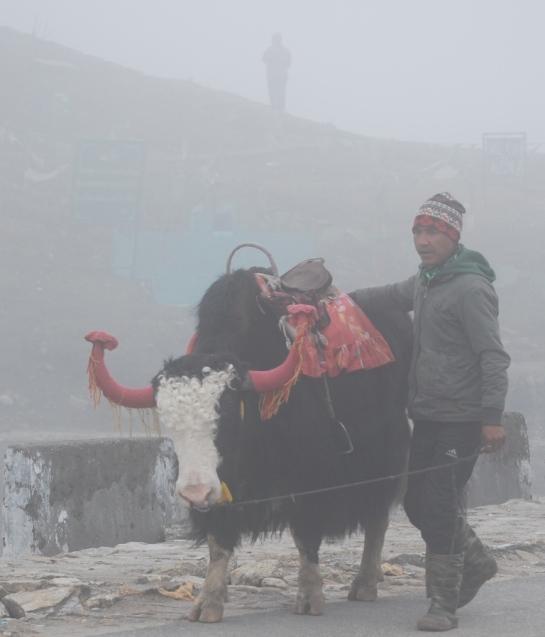yeti in the mist