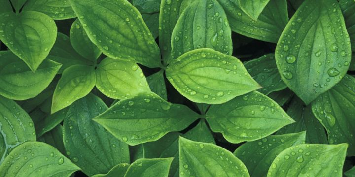 landscape-1439490128-plants