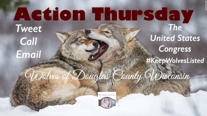 Action Thursday: Tell congress to stop the war onwolves
