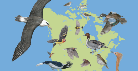 The State of North America's Birds 2016