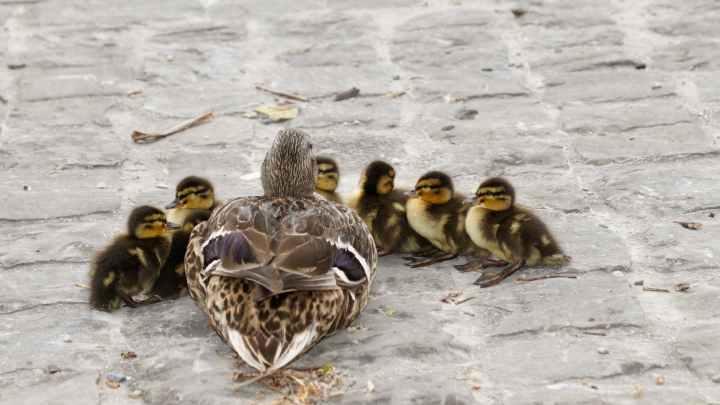 Birds from WaldenDucks